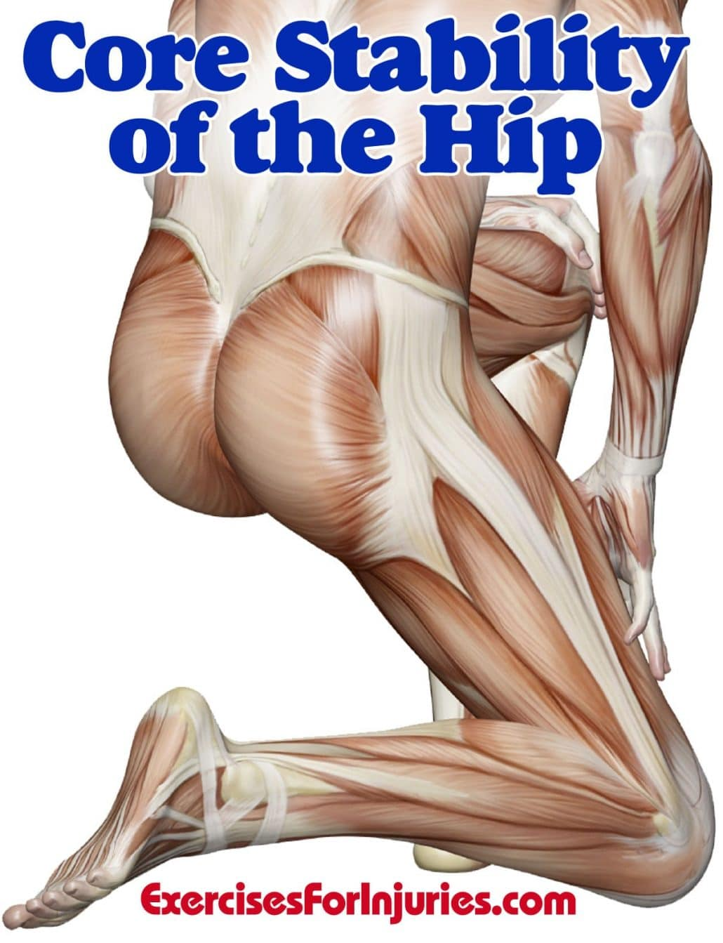 Core_Stability_of_the_Hip