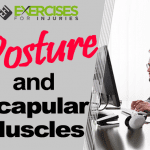 Posture and Scapular Muscles