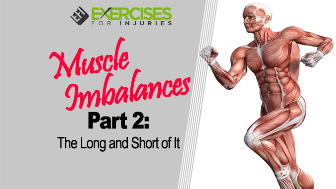 Muscle Imbalances Part 2 The Long and Short of It