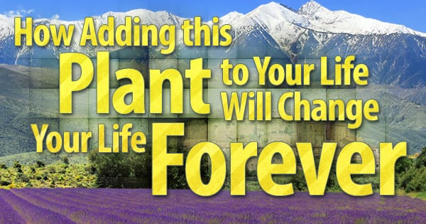 misc79-1-600x315-How-Adding-this-Plant-to-Your-Life-Will-Change-Your-Life-Forever