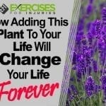 How Adding this Plant to Your Life Will Change Your Life Forever