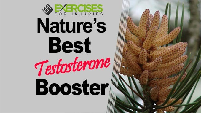 Nature's Best Testosterone Booster