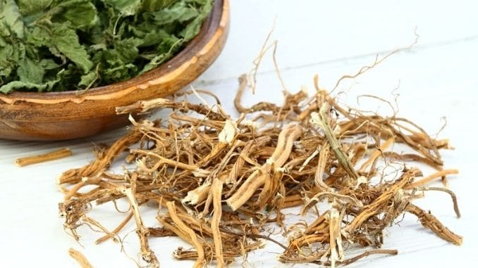 dried-nettle-roots-leaves