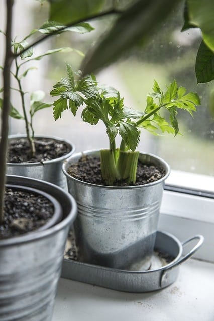 fresh plants for your home