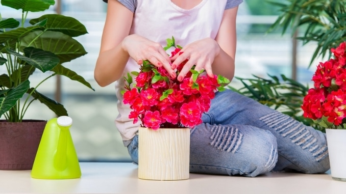 7 Easy-To-Grow Houseplants to Purify the Air in Your Home