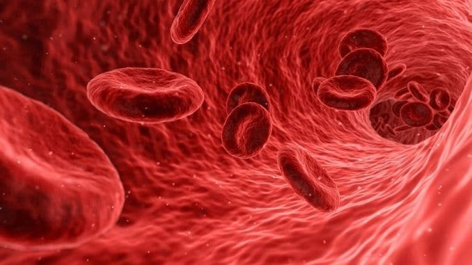 blood-cells-red